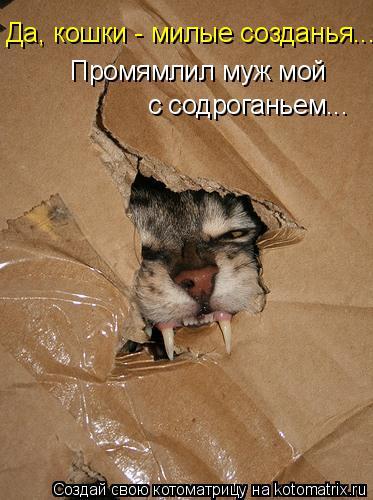 Котоматрица: Промямлил муж мой с содроганьем... Да, кошки - милые созданья...
