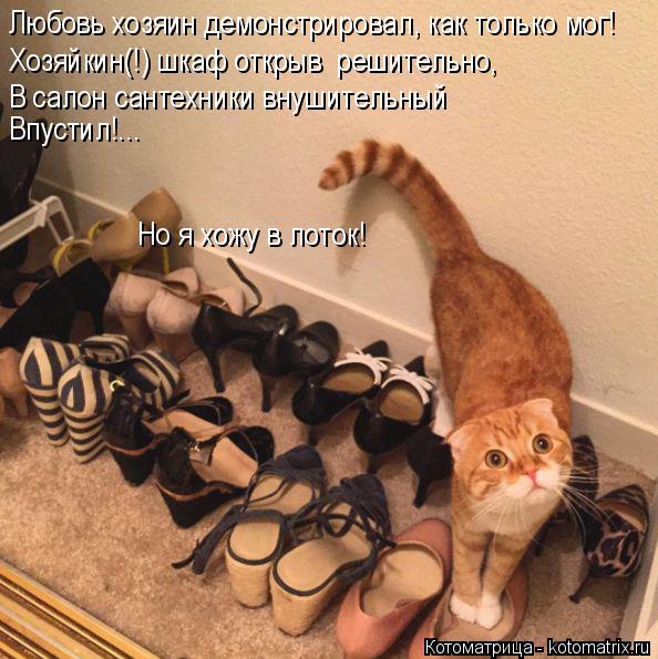 Котоматрица: Любовь хозяин демонстрировал, как только мог! Хозяйкин(!) шкаф открыв  решительно, В салон сантехники внушительный Впустил!...  Но я хожу в лот