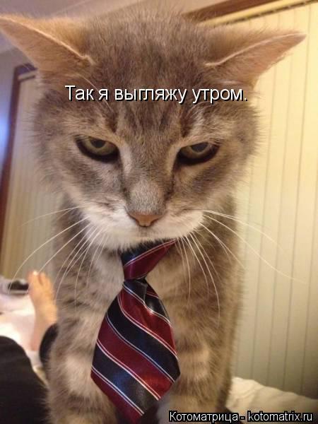 Котоматрица: Так я выгляжу утром.