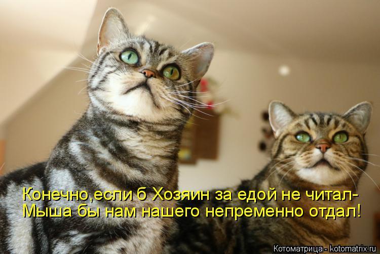 Котоматрица: Конечно,если б Хозяин за едой не читал- Мыша бы нам нашего непременно отдал!