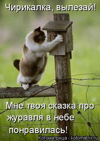 Котоматрица: Чирикалка, вылезай! Мне твоя сказка про журавля в небе понравилась!