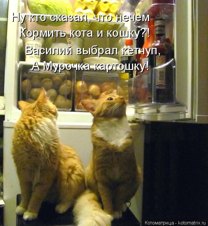 Котоматрица: Ну кто сказал, что нечем Кормить кота и кошку?! Василий выбрал кетчуп, А Мурочка картошку!
