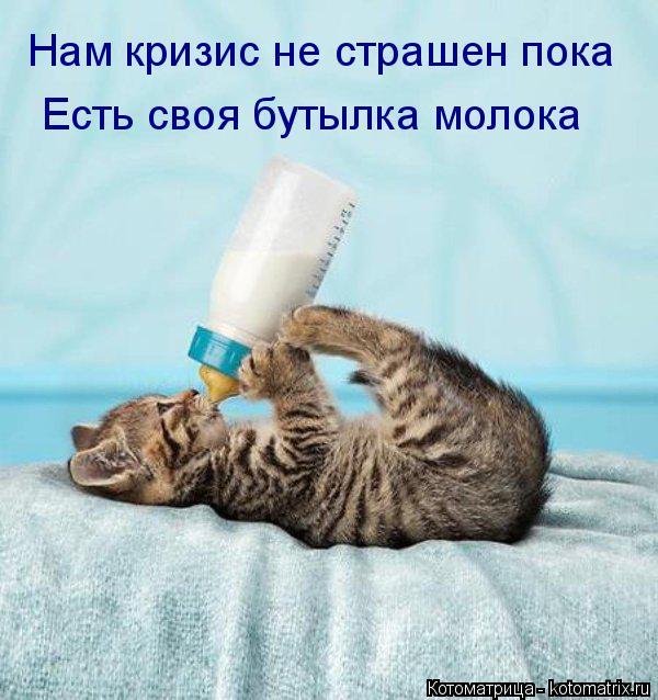 Котоматрица: Нам кризис не страшен пока  Есть своя бутылка молока
