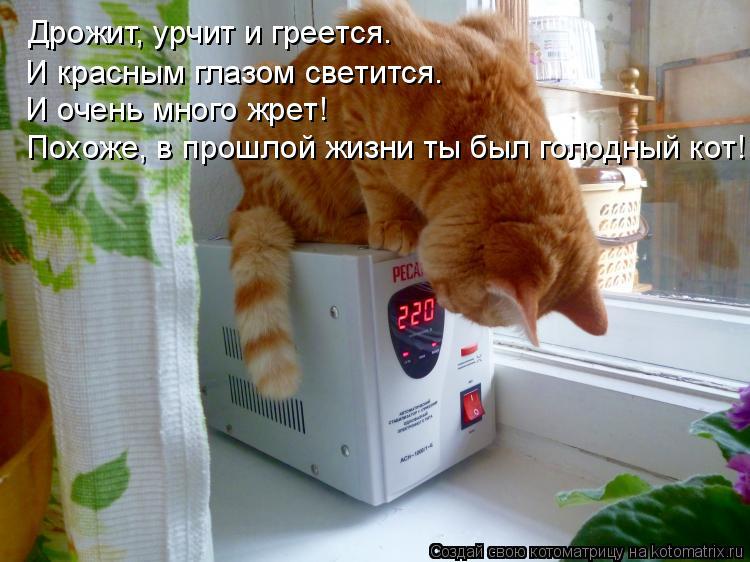 Котоматрица: Дрожит, урчит и греется. И красным глазом светится. И очень много жрет! Похоже, в прошлой жизни ты был голодный кот!