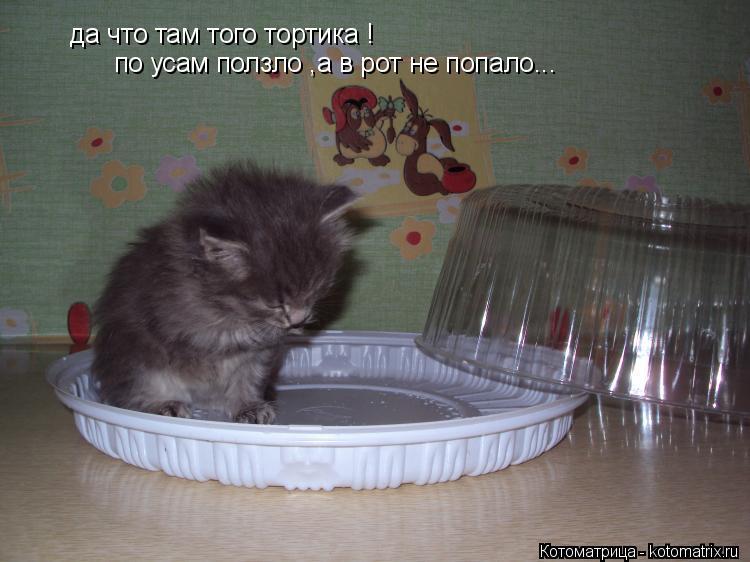 Котоматрица: да что там того тортика ! по усам ползло ,а в рот не попало...