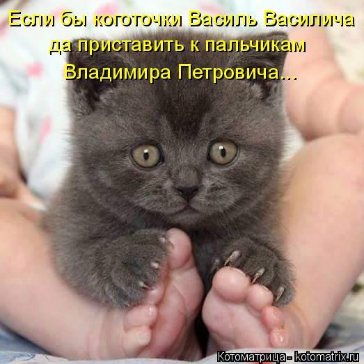 Котоматрица: Если бы коготочки Василь Василича да приставить к пальчикам  Владимира Петровича...