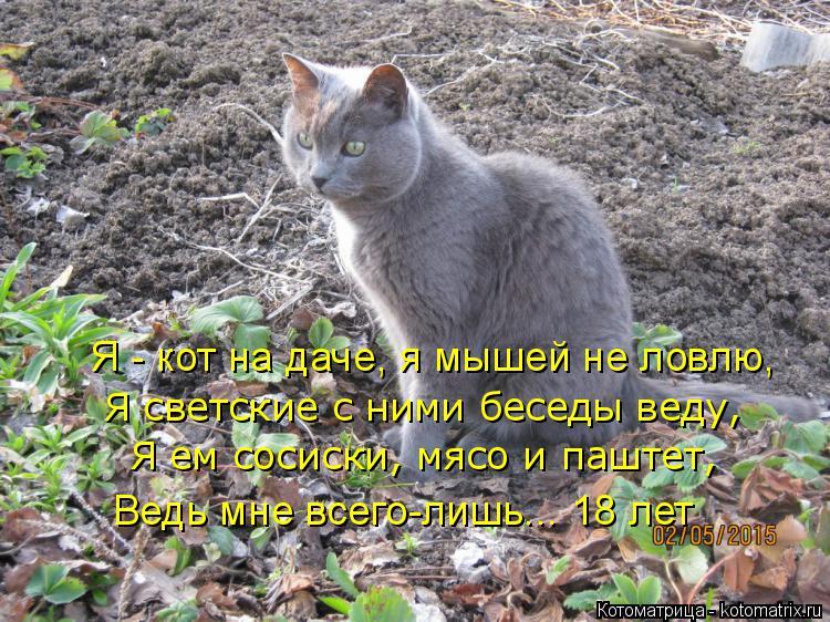 Котоматрица: Я - кот на даче, я мышей не ловлю, Я светские с ними беседы веду, Я ем сосиски, мясо и паштет, Ведь мне всего-лишь... 18 лет