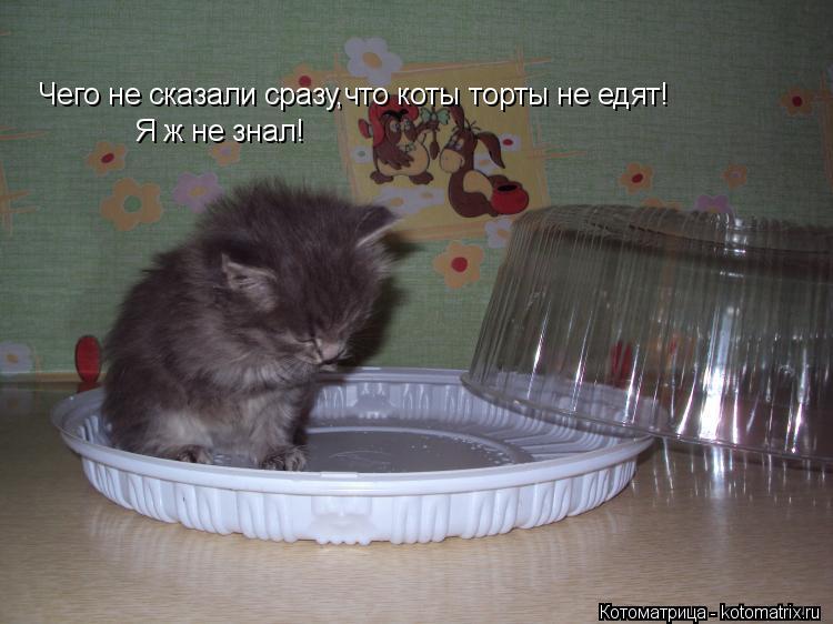 Котоматрица: Чего не сказали сразу,что коты торты не едят! Я ж не знал!