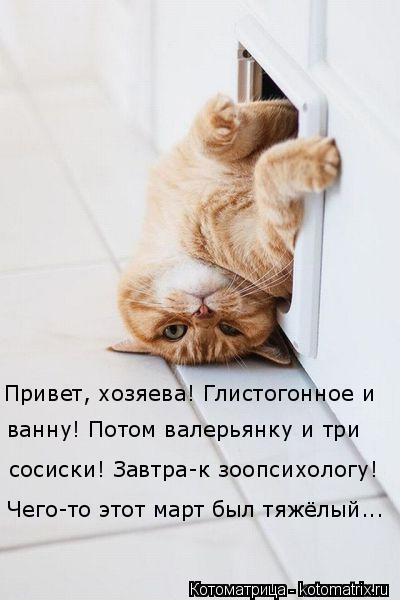 Котоматрица: Привет, хозяева! Глистогонное и  Чего-то этот март был тяжёлый... сосиски! Завтра-к зоопсихологу! ванну! Потом валерьянку и три