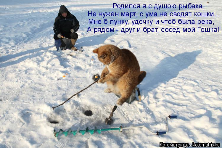 Котоматрица: Родился я с душою рыбака. Не нужен март, с ума не сводят кошки... Мне б лунку, удочку и чтоб была река,  А рядом - друг и брат, сосед мой Гошка!