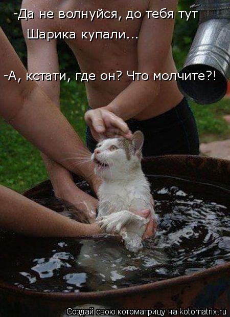 Котоматрица: -Да не волнуйся, до тебя тут  Шарика купали... -А, кстати, где он? Что молчите?!