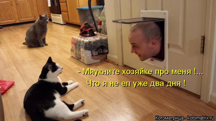 Котоматрица: - Мяукните хозяйке про меня !... Что я не ел уже два дня !