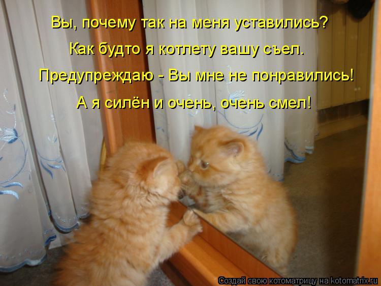 Котоматрица: Вы, почему так на меня уставились? Как будто я котлету вашу съел. Предупреждаю - Вы мне не понравились! А я силён и очень, очень смел!