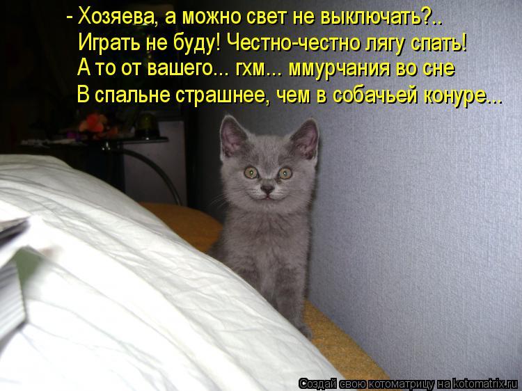 Котоматрица: Играть не буду! Честно-честно лягу спать! - Хозяева, а можно свет не выключать?.. А то от вашего... гхм... ммурчания во сне В спальне страшнее, чем