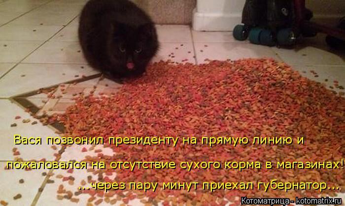 Котоматрица: Вася позвонил президенту на прямую линию и  пожаловался на отсутствие сухого корма в магазинах! ...через пару минут приехал губернатор...
