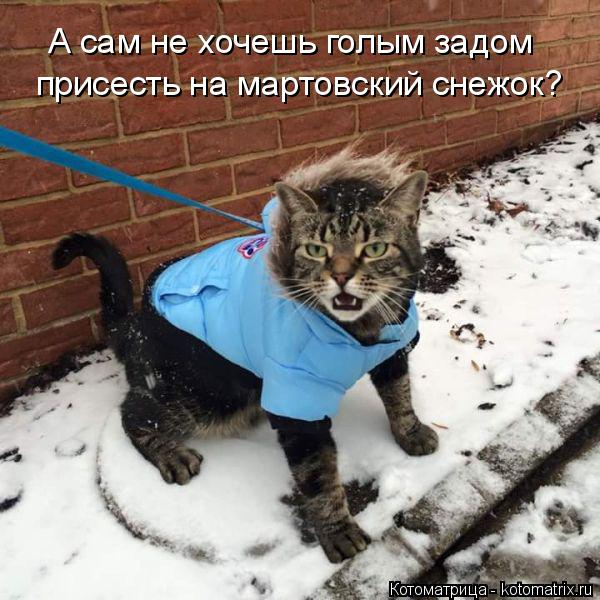 Котоматрица: А сам не хочешь голым задом присесть на мартовский снежок?