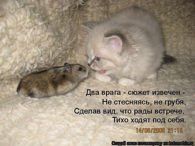 Котоматрица: Два врага - сюжет извечен - Не стесняясь, не грубя, Сделав вид, что рады встрече, Тихо ходят под себя.