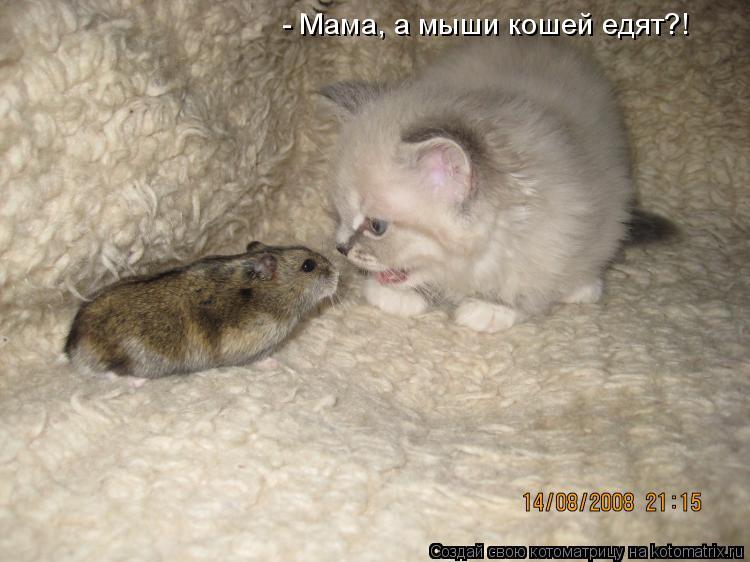 Котоматрица: - Мама, а мыши кошей едят?!