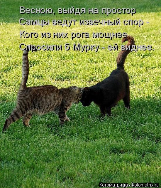 Котоматрица: Весною, выйдя на простор Самцы ведут извечный спор - Кого из них рога мощнее Спросили б Мурку - ей виднее.