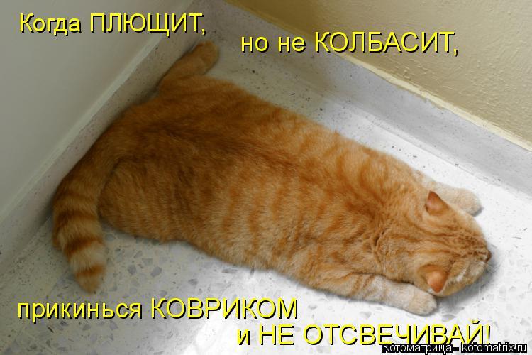 Котоматрица: Когда ПЛЮЩИТ, но не КОЛБАСИТ, прикинься КОВРИКОМ и НЕ ОТСВЕЧИВАЙ!