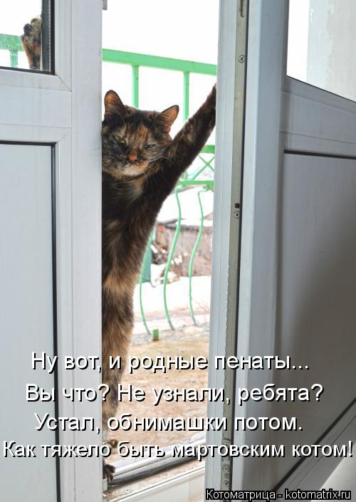 Котоматрица: Как тяжело быть мартовским котом! Устал, обнимашки потом. Вы что? Не узнали, ребята? Ну вот, и родные пенаты...