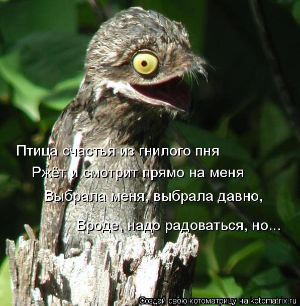 Котоматрица: Птица счастья из гнилого пня Ржёт и смотрит прямо на меня Выбрала меня, выбрала давно, Вроде, надо радоваться, но...