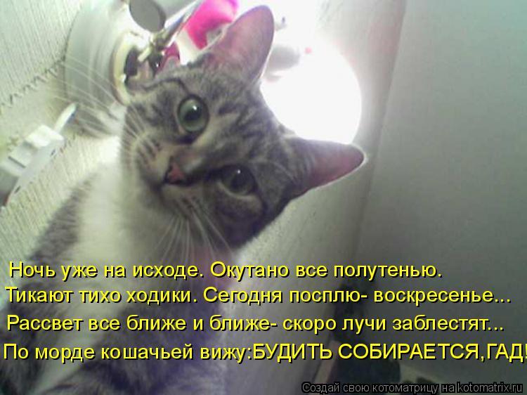Котоматрица: По морде кошачьей вижу:БУДИТЬ СОБИРАЕТСЯ,ГАД! Тикают тихо ходики. Сегодня посплю- воскресенье... Ночь уже на исходе. Окутано все полутенью. Р