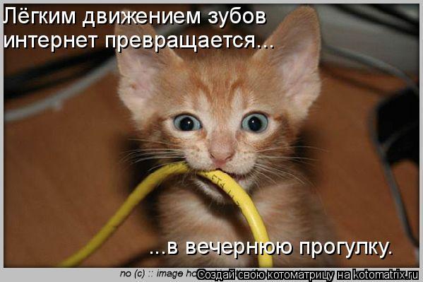 Котоматрица: Лёгким движением зубов интернет превращается... ...в вечернюю прогулку.