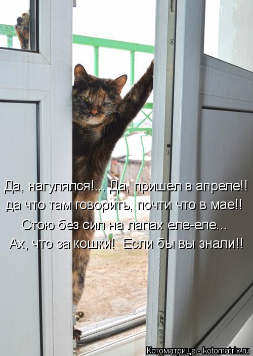 Котоматрица: Да, нагулялся!... Да, пришел в апреле!! да что там говорить, почти что в мае!! Стою без сил на лапах еле-еле... Ах, что за кошки!  Если бы вы знали!!