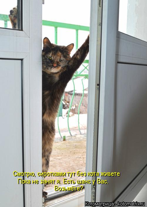 Котоматрица: Смотрю, сиротками тут без кота живете Пока не занят я. Есть шанс у Вас. Возьмёте?