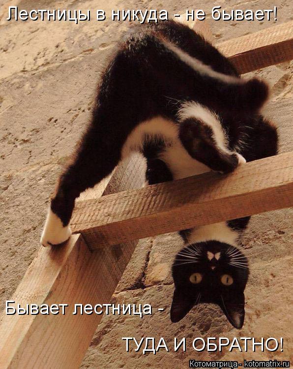 Котоматрица: Лестницы в никуда - не бывает! Бывает лестница -  ТУДА И ОБРАТНО!