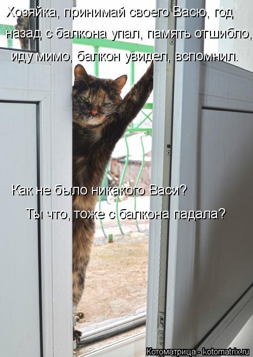Котоматрица: Хозяйка, принимай своего Васю, год   назад с балкона упал, память отшибло, иду мимо, балкон увидел, вспомнил. Как не было никакого Васи? Ты что,