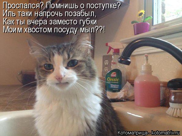 Котоматрица: Проспался? Помнишь о поступке? Иль таки напрочь позабыл,  Как ты вчера заместо губки Моим хвостом посуду мыл??!