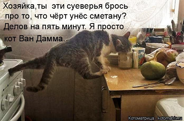 Котоматрица: Хозяйка,ты  эти суеверья брось про то, что чёрт унёс сметану? Делов на пять минут. Я просто кот Ван Дамма.