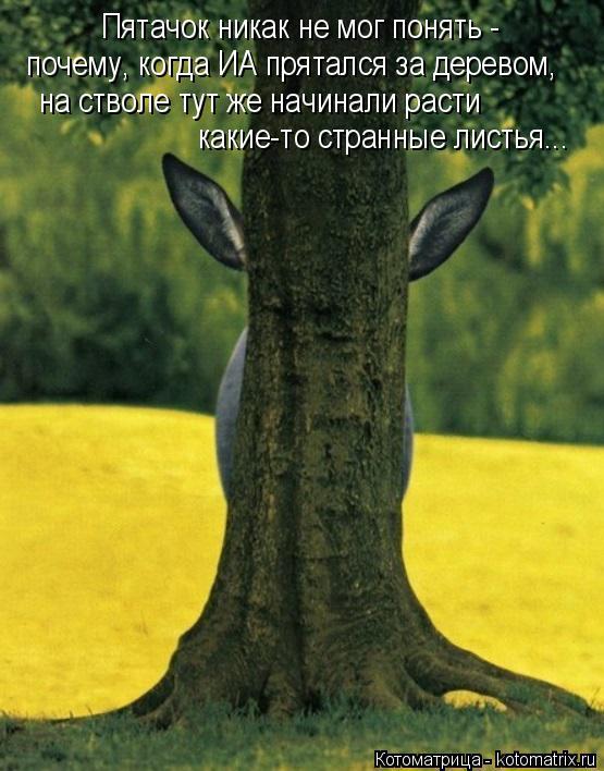 Котоматрица: Пятачок никак не мог понять - почему, когда ИА прятался за деревом, на стволе тут же начинали расти какие-то странные листья...