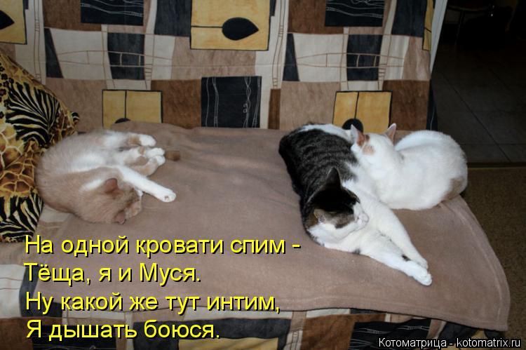 Котоматрица: На одной кровати спим - Тёща, я и Муся. Ну какой же тут интим, Я дышать боюся.