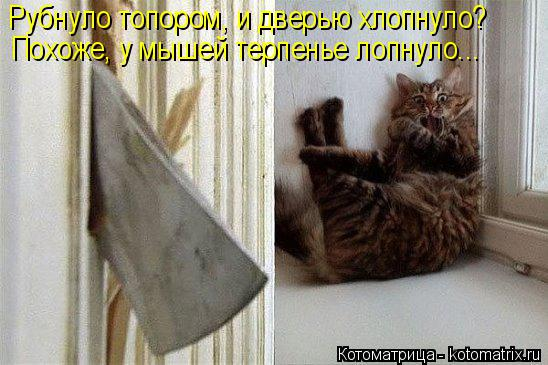 Котоматрица: Рубнуло топором, и дверью хлопнуло? Похоже, у мышей терпенье лопнуло...