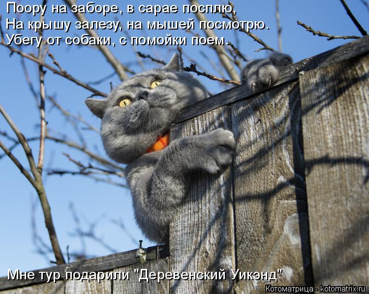 """Котоматрица: Поору на заборе, в сарае посплю, На крышу залезу, на мышей посмотрю. Убегу от собаки, с помойки поем. Мне тур подарили """"Деревенский Уикэнд"""""""