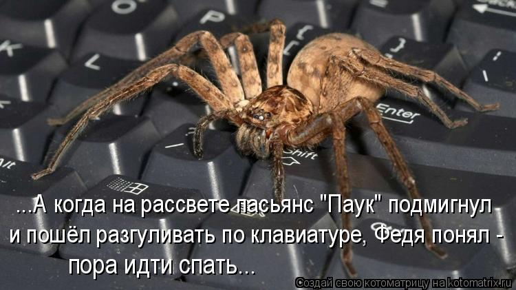 """Котоматрица: ...А когда на рассвете пасьянс """"Паук"""" подмигнул и пошёл разгуливать по клавиатуре, Федя понял - пора идти спать..."""
