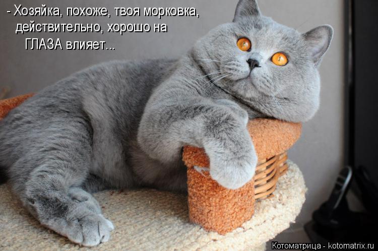 Котоматрица: - Хозяйка, похоже, твоя морковка, действительно, хорошо на  ГЛАЗА влияет...