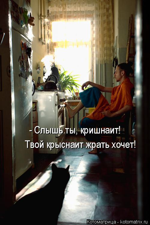 Котоматрица: - Слышь ты, кришнаит! Твой крыснаит жрать хочет!