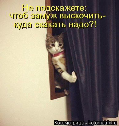 Котоматрица: Не подскажете: чтоб замуж выскочить- куда скакать надо?!