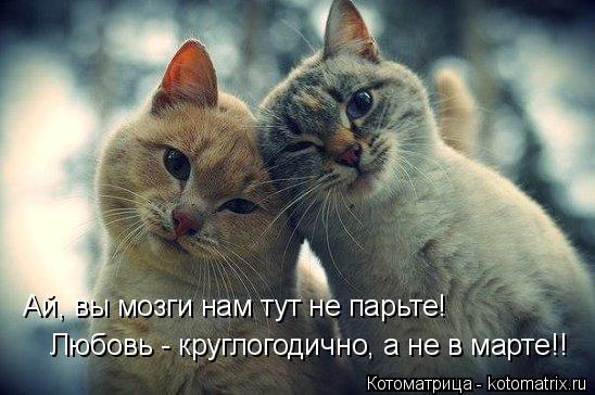 Котоматрица: Ай, вы мозги нам тут не парьте! Любовь - круглогодично, а не в марте!!