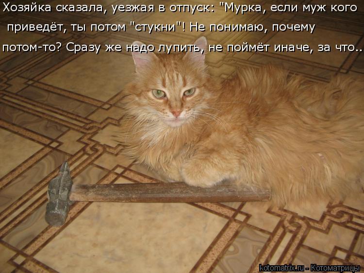 http://kotomatrix.ru/images/lolz/2016/04/23/kotomatritsa_7.jpg