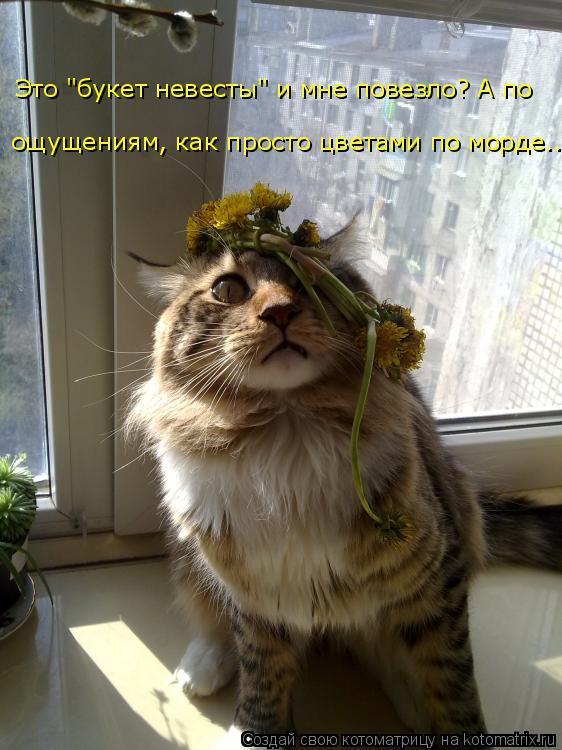 """Котоматрица: Это """"букет невесты"""" и мне повезло? А по  ощущениям, как просто цветами по морде..."""