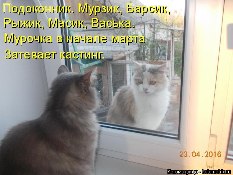 Котоматрица: Подоконник. Мурзик, Барсик, Рыжик, Масик, Васька. Мурочка в начале марта Затевает кастинг.