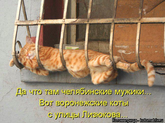 Котоматрица: Да что там челябинские мужики... Вот воронежские коты  с улицы Лизюкова...