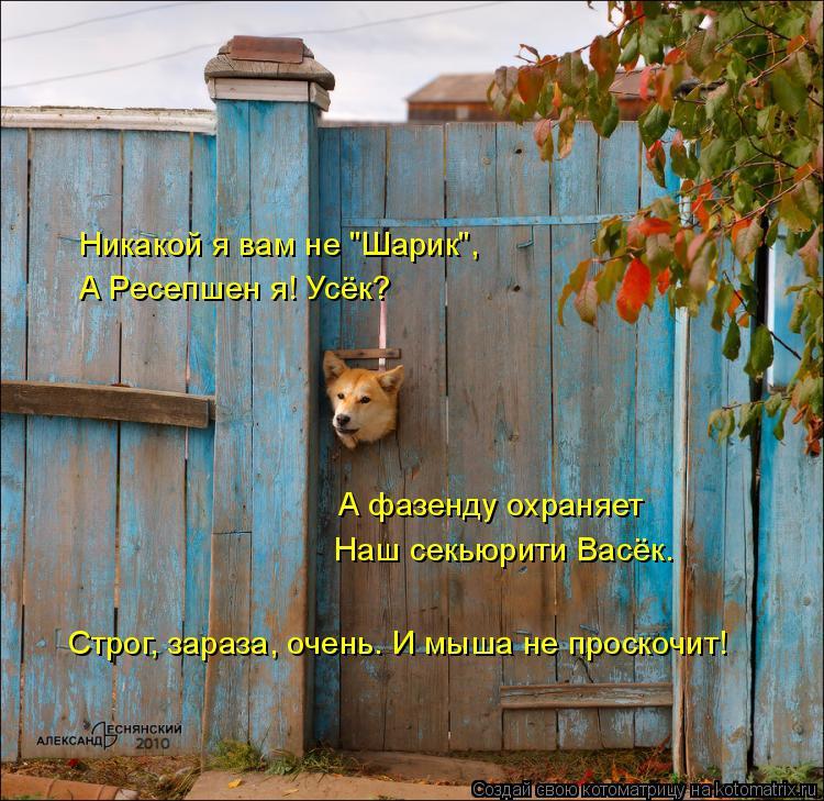 """Котоматрица: Никакой я вам не """"Шарик"""",  А Ресепшен я! Усёк? А фазенду охраняет Строг, зараза, очень. И мыша не проскочит! Наш секьюрити Васёк."""