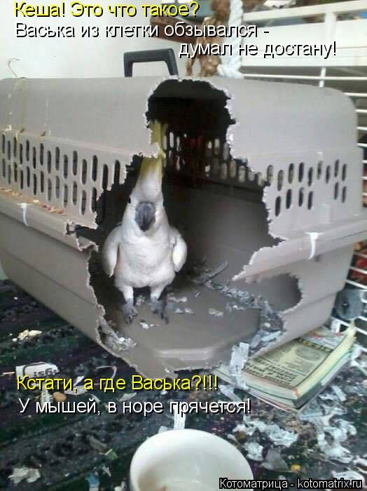 Котоматрица: Кеша! Это что такое? Васька из клетки обзывался -  думал не достану! Кстати, а где Васька?!!! У мышей, в норе прячется!