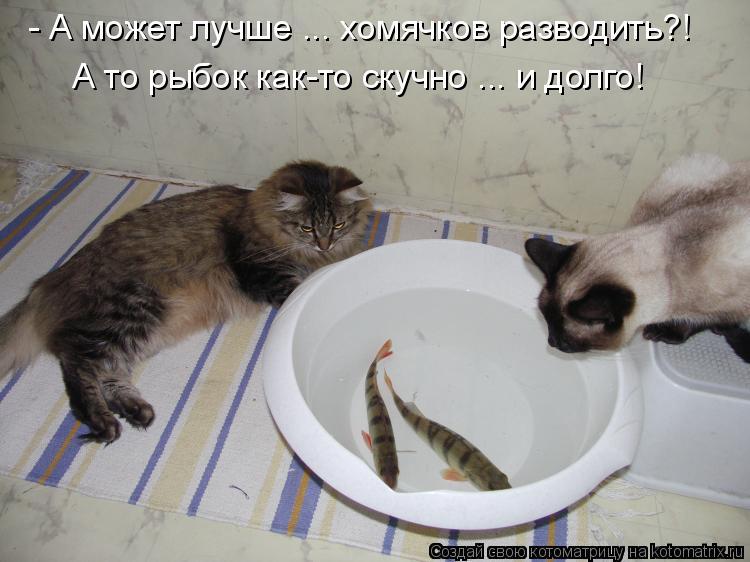 Котоматрица: - А может лучше ... хомячков разводить?! А то рыбок как-то скучно ... и долго!